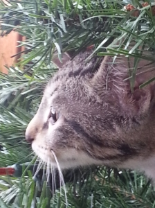 Smudge in tree